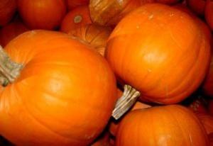pumpkins-piled_2732605
